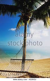 island palm tree hammock stock photos u0026 island palm tree hammock