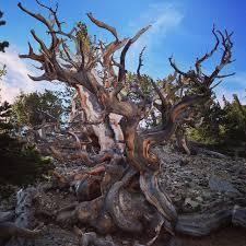 list trees part i the oldest a fairman forest