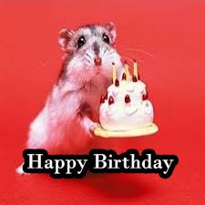 Cute Birthday Meme - cute happy birthday images qygjxz