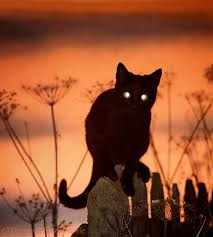 halloween kittens black cat eyes at sunset photo wp00970