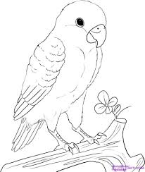 how to draw a peach faced lovebird hundreds of drawing tuts on