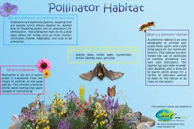 pollinators of native plants cass county soil conservation urban projects
