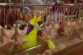 lives on the line human cost of chicken oxfam america