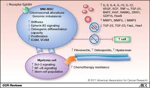 multiple myeloma mesenchymal stem cells characterization origin