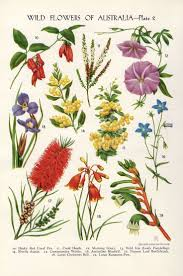 queensland native plants 149 best australian flora images on pinterest australian native