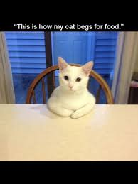 50 best cute and purrfect cats images on pinterest fluffy pets
