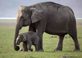 about us who we are elephant family