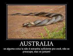 Australia Meme - australia pessoal meme by skoinks memedroid