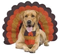 the cutest turkey dogs you will see our community now