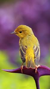 Color Yellow 207 Best Purple And Yellow Images On Pinterest Yellow Color