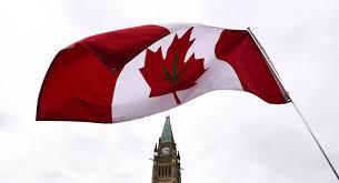 What Leaf Is On The Canadian Flag Early Cannabis Sales U0027unbelievably High U0027 After Legalization Feds