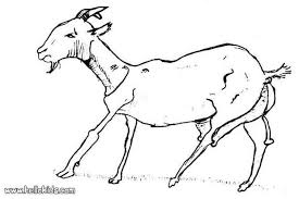goat coloring pages hellokids com