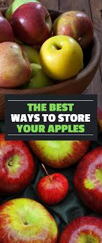 fall harvest how to and store apples for the winter