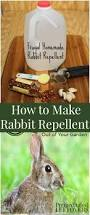 how to make rabbit repellent frugal pantry and rabbit