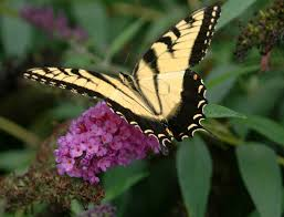 native plants for butterfly gardening benton soil u0026 water arkansas ornamental shrubs