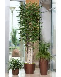 Artificial Decorative Trees For The Home Realistic Cost Effective Silk U0026 Artificial Trees At