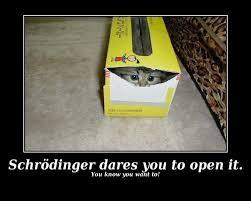 Random Cat Meme - kill the kitty schrodinger s cat know your meme
