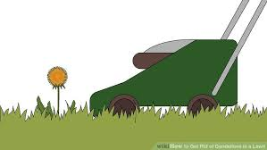 How Do I Get Rid Of Rabbits In My Backyard How To Get Rid Of Dandelions In A Lawn 12 Steps With Pictures