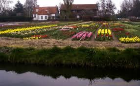 it u0027s almost tulip time in amsterdam u2013 unclogged in amsterdam