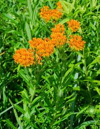 ohio native plants on the subject of nature july 2014