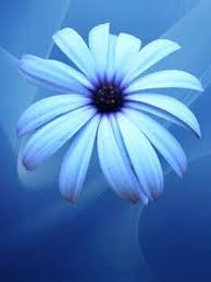 light blue flowers blue flowers light blue flower wallpaper iphone blackberry