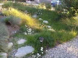 native plants for rain gardens rain gardens u0026 swales stout design build