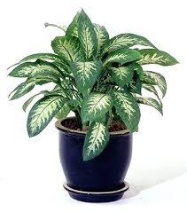 decorative indoor plants indoor plant hanging ideas home decor decorative indoor house indoor