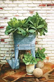 388 best container gardens images on pinterest gardening flower