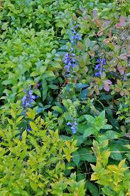 native woodland plants garden bytes from the big apple native in new york