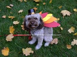 Halloween Costumes Dogs 158 Pet Halloween Costumes Images Homemade
