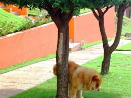 urban dog ring holder images Why you shouldn 39 t let your dog pee on trees citylab jpg