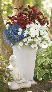 Container Garden Ideas Full Sun 55 Best Single Plants For Containers Images On Pinterest