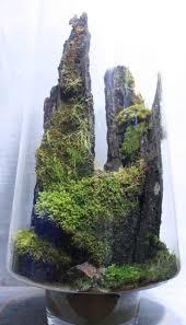 153 best terrariums images on pinterest terrariums plants and