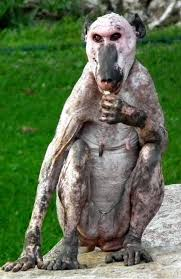 Hairless Bear Meme - here are 16 hairless animals in case you were curious