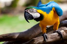 Parrot Decorations Home Parrot Fever Psittacosis Causes Symptoms And Treatment