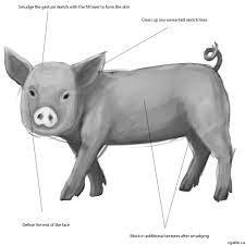 draw pig easy follow guide making simple pig