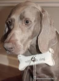 acrylic dog ring holder images 51 best anthropomorphic animals images animal jpg