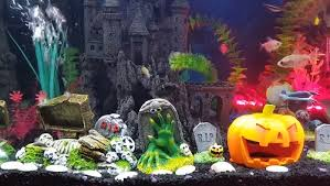 Spooky Halloween aquarium decorations and setup guide