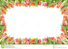 Images Of Tulip Flowers - frame of tulip flowers royalty free stock images image 29687029