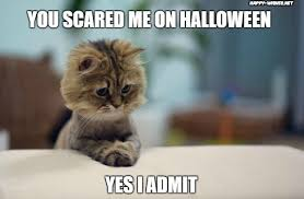 Scared Cat Meme - funny halloween cat memes happy wishes