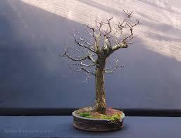 bin gregory productions tiny trees