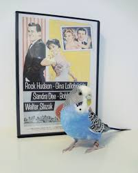 Movies Villa Budgies In The Movies