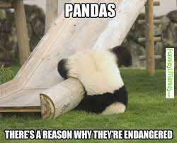 Stupid Animal Memes - funniestmemes com you just got to love pandas for all the stupid