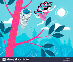 butterfly leaving cocoon stock photos butterfly leaving cocoon