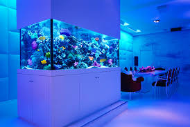 accessories contemporary fish tank contemporary fish tank