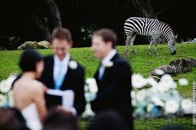San Francisco Photographers San Francisco Zoo Wedding Alison Eli San Francisco Wedding