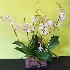 orchid arrangements bright light in glass white phalaenopsis orchid arrangement