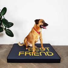 modern dog beds and feeders from hello pets dog milk