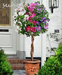 Cheap Flower Seeds - online get cheap hibiscus seeds rare aliexpress com alibaba group