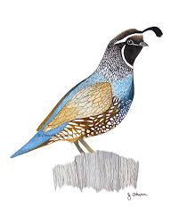 quail family illustration archival art print for nursery kitchen